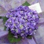 bouquet-violette
