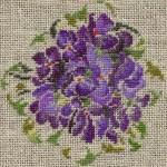violettes-gp