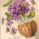violettesuz7